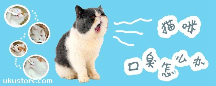 猫咪口臭怎么办