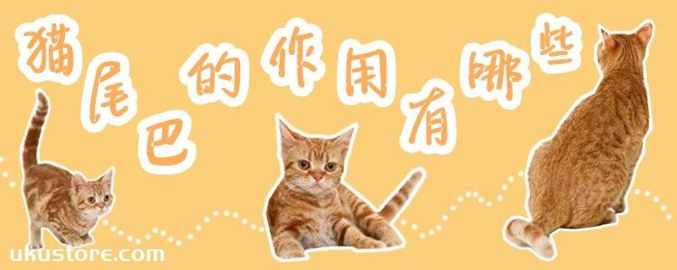 猫尾巴的作用有哪些