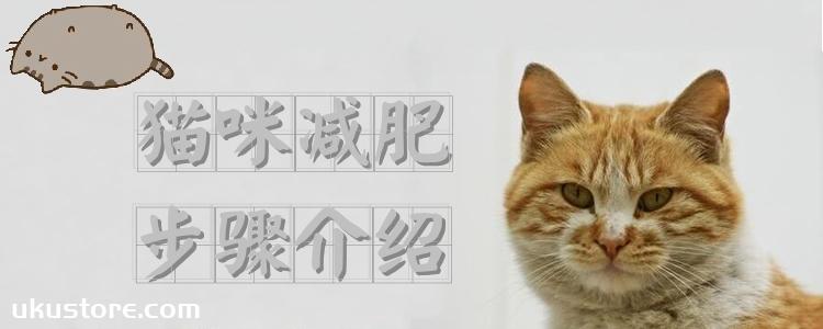 猫咪减肥步骤介绍