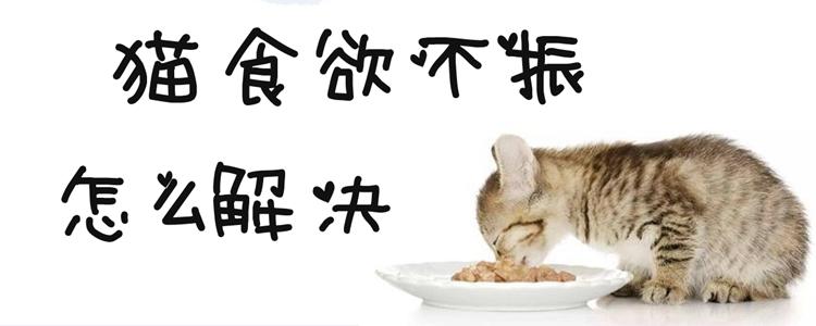 猫食欲不振怎么解决