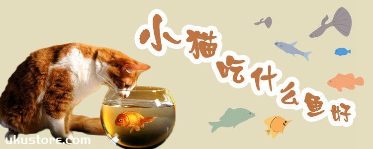 小猫吃什么鱼好