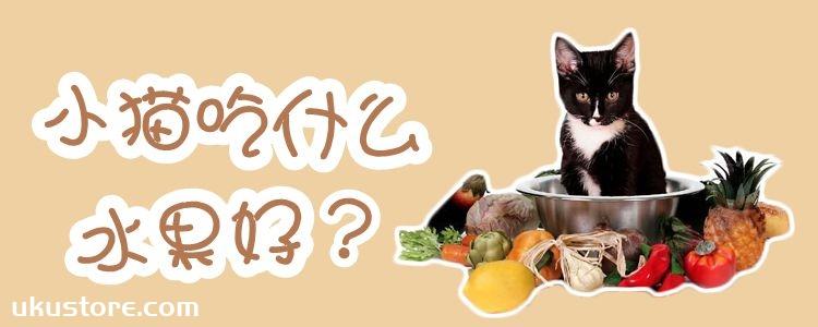 小猫吃什么水果好