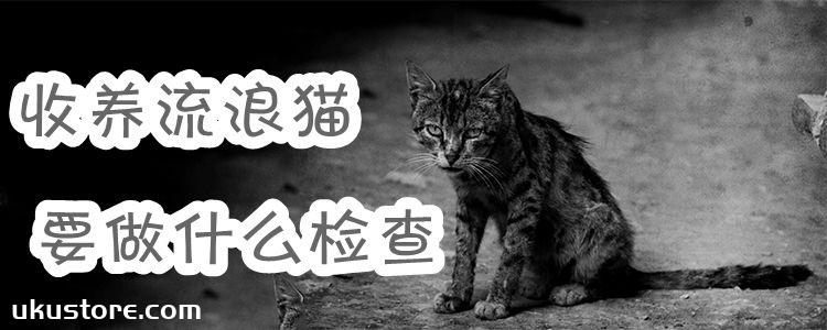 收养流浪猫要做什么检查