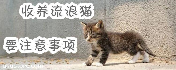 收养流浪猫要注意事项