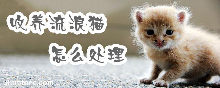收养流浪猫怎么处理