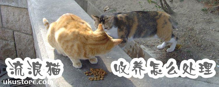 流浪猫收养怎么处理