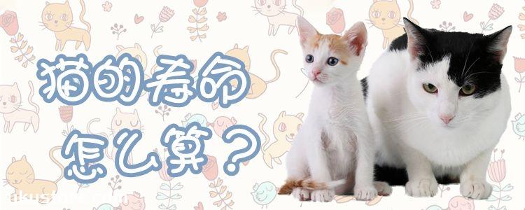 猫的寿命怎么算