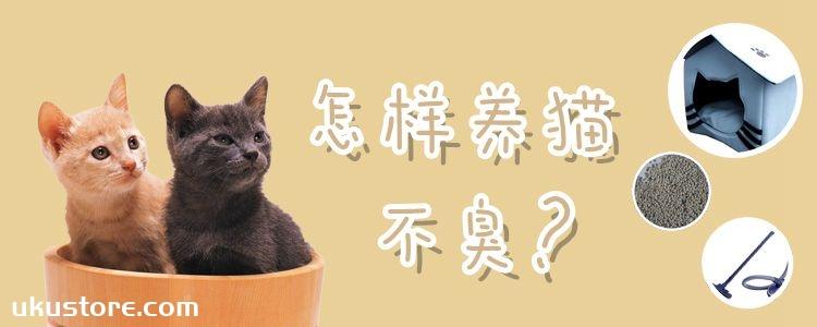 怎样养猫不臭