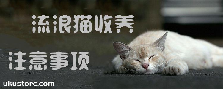 流浪猫收养注意事项
