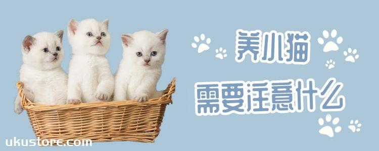 养小猫需要注意什么