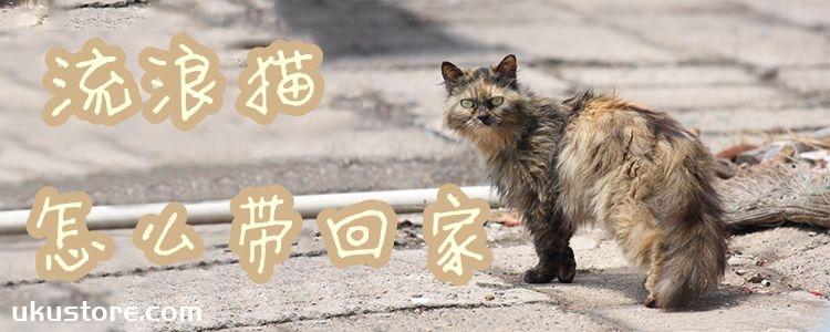 流浪猫怎么带回家1