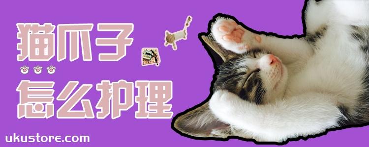 猫爪子怎么护理
