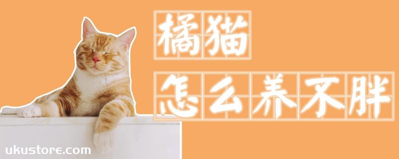 橘猫怎么养不胖