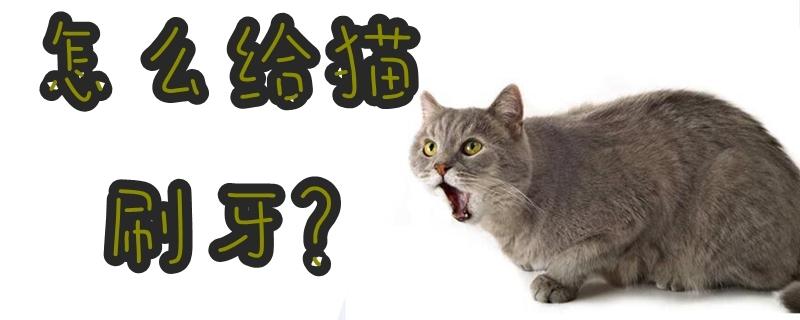 怎么给猫刷牙