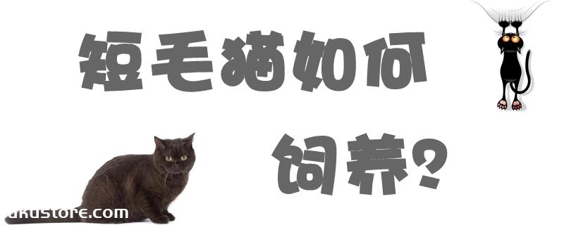 短毛猫如何饲养
