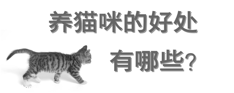 养猫咪的好处有哪些