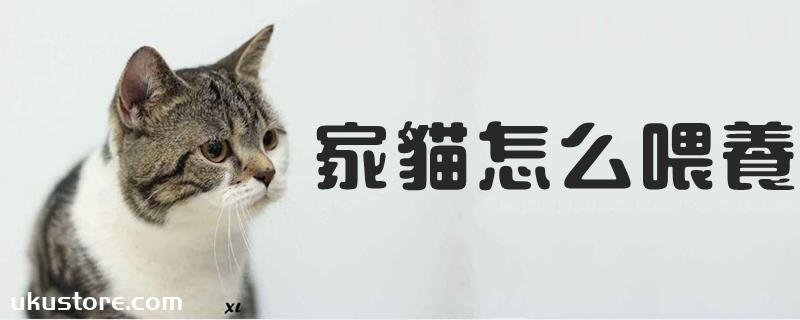 家猫怎么喂养