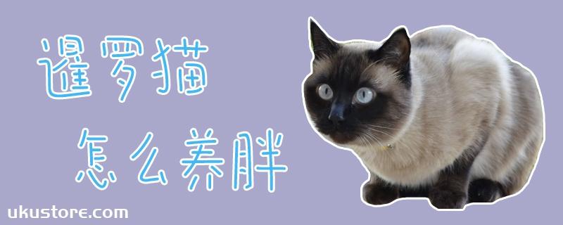 暹罗猫怎么养胖