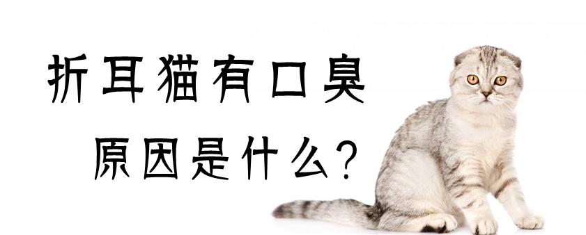 折耳猫有口臭原因是什么