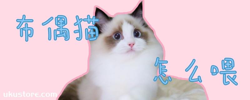 布偶猫怎么喂