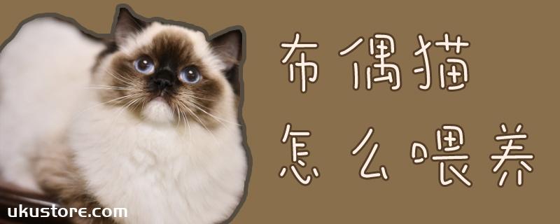 布偶猫怎么喂养