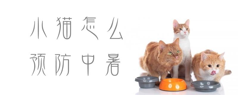 小猫怎么预防中暑