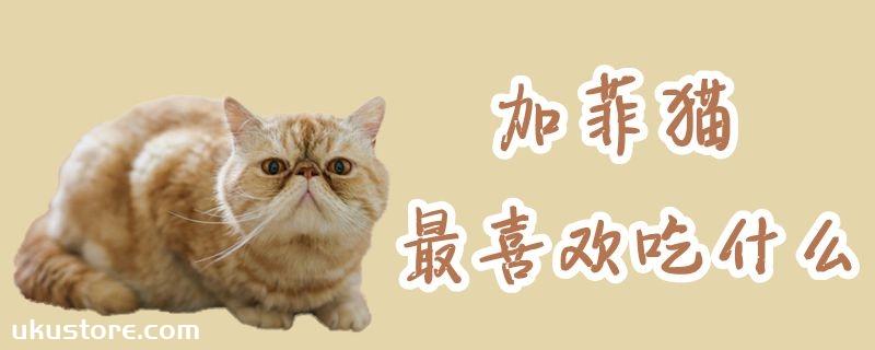 加菲猫最喜欢吃什么