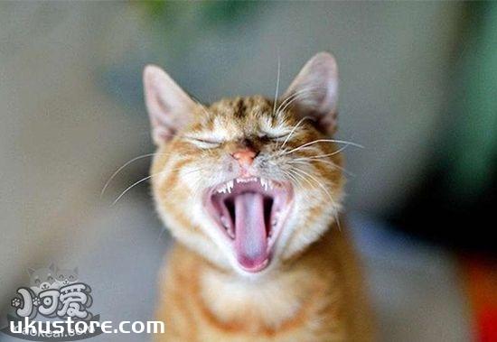 猫咪口腔怎么护理 猫咪口腔护理步骤