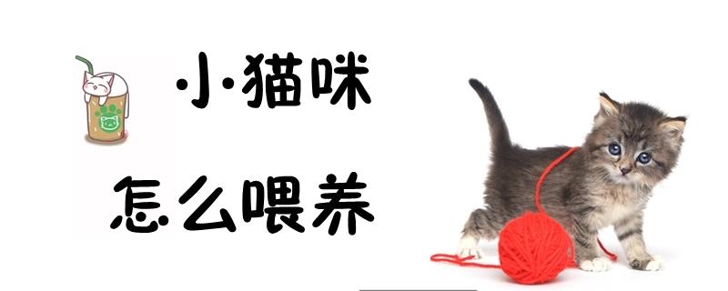 小猫咪怎么喂养