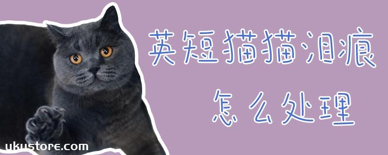 英短猫猫泪痕怎么处理