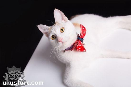 家里养猫要注意什么 家里养猫注意事项