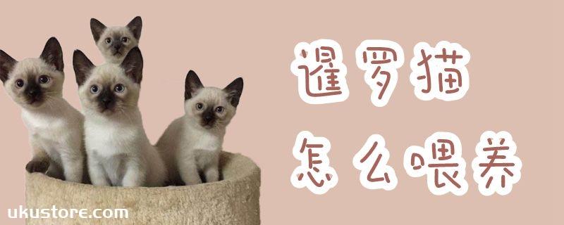 暹罗猫怎么喂养