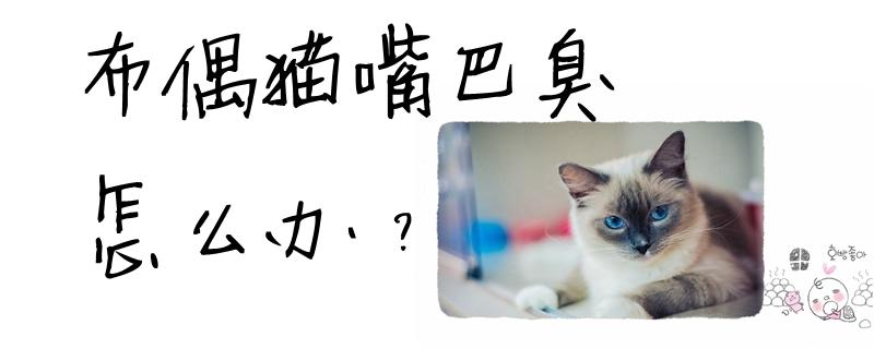 布偶猫嘴巴臭怎么办