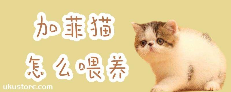 加菲猫怎么喂养