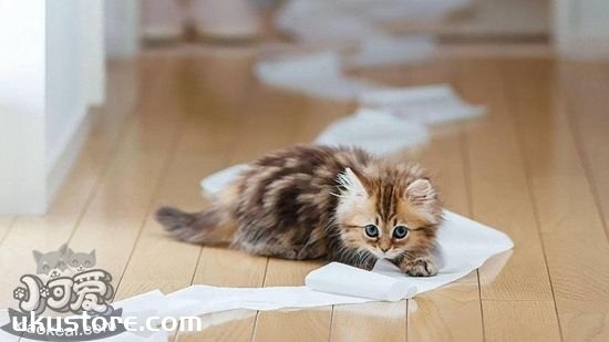 猫厕所怎么自制 猫厕所自制方法