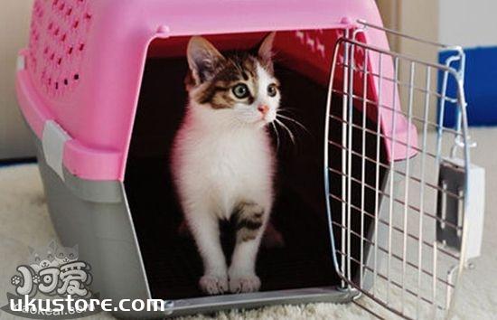 猫咪空运要注意什么 猫咪空运注意事项介绍
