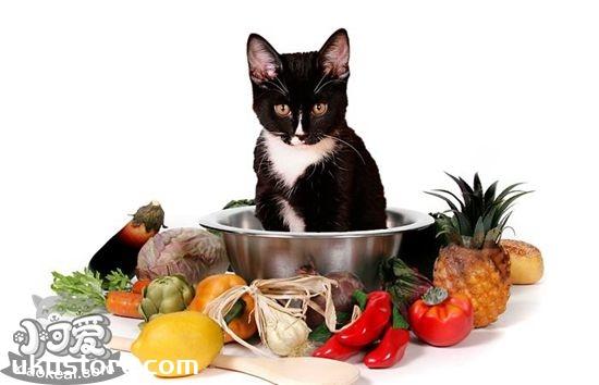猫咪不能吃的食物有哪些 猫咪禁忌食物介绍