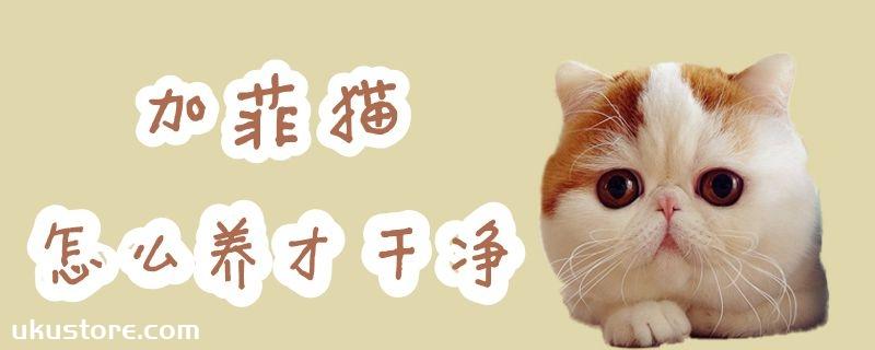 加菲猫怎么养才干净