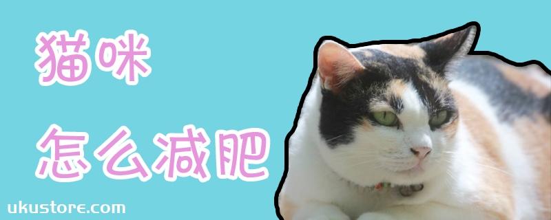 猫咪怎么减肥