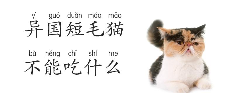 异国短毛猫不能吃什么