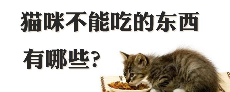 猫咪不能吃的东西有哪些