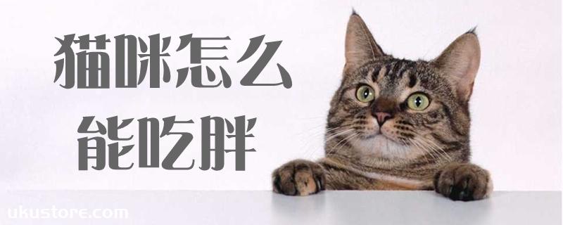 猫咪怎么能吃胖