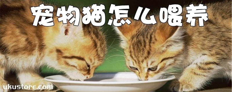 宠物猫怎么喂养