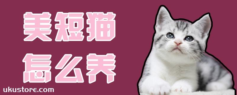 美短猫怎么养