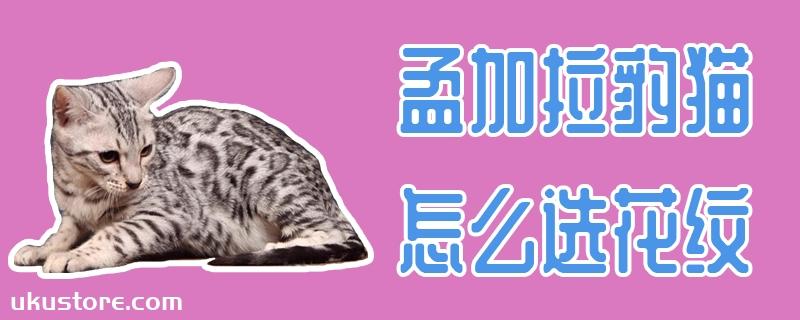 孟加拉豹猫怎么选花纹