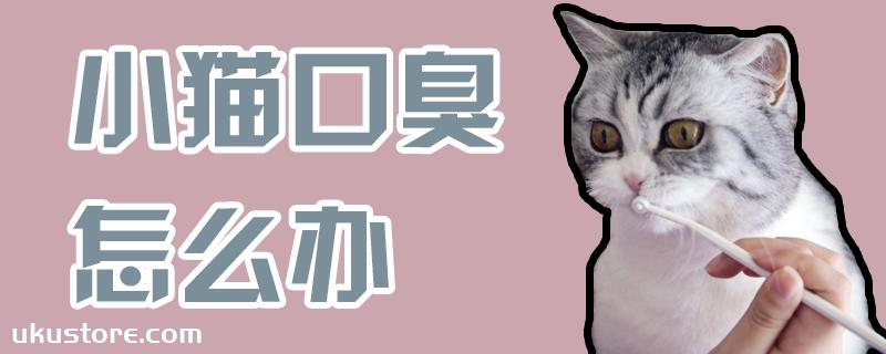 小猫口臭怎么办