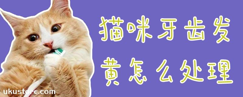 猫咪牙齿发黄怎么处理