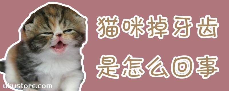猫咪掉牙齿是怎么回事