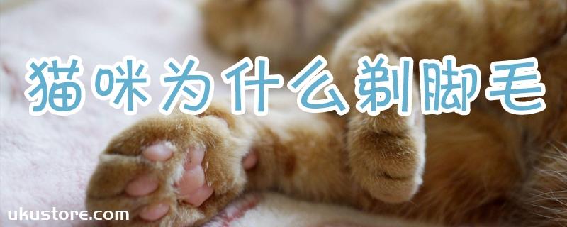猫咪为什么剃脚毛
