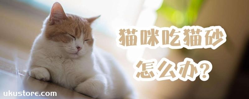 猫咪吃猫砂怎么办